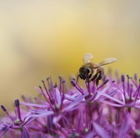 Bee Good photo