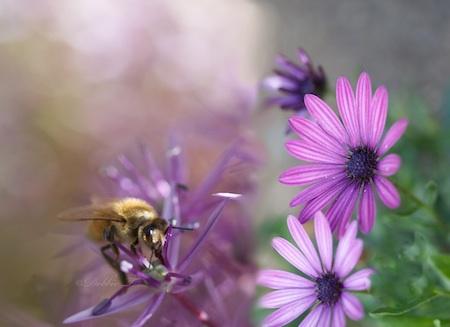 purple diptych