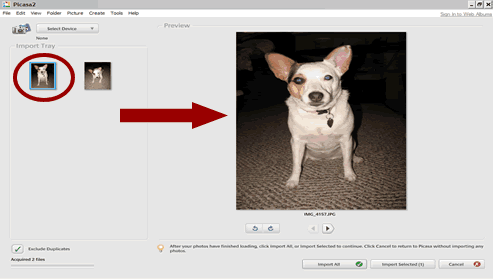 screen shot - picasa 2 interface